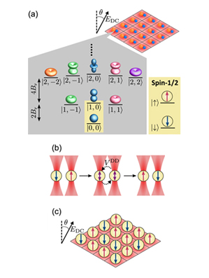 Ultracold molecules for quantum simulation: rotational coherences in CaF and RbCs